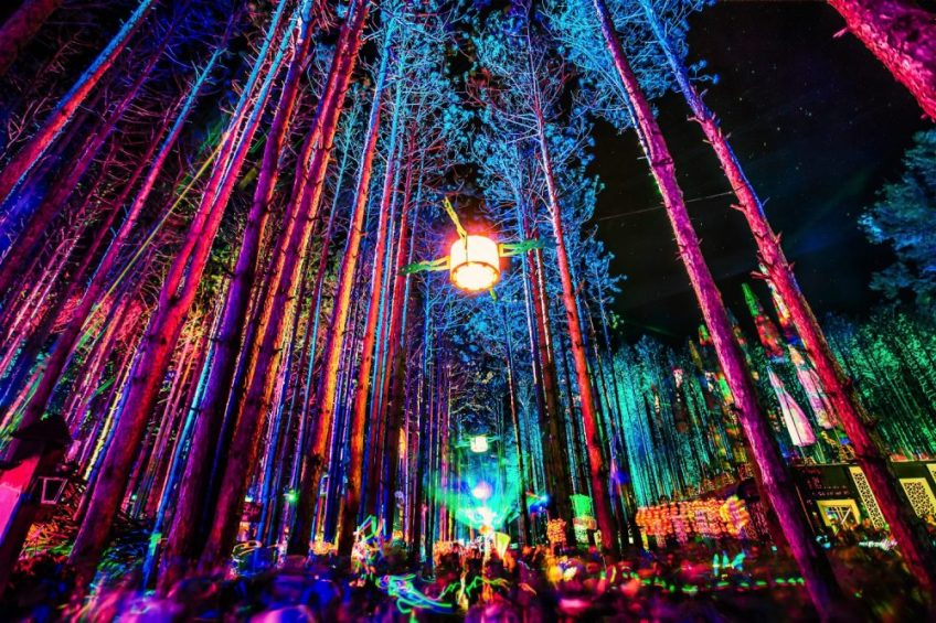 forest night 1